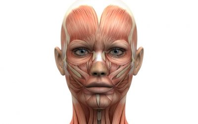 The anatomy of the Glabella and toxins application